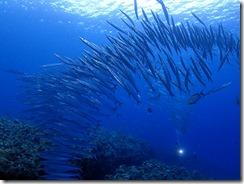 okinawa kerama diving1024