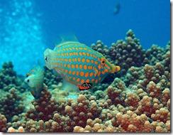 okinawa kerama diving1025