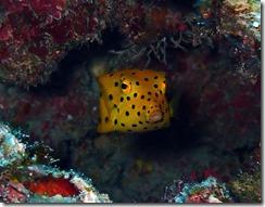 okinawa kerama diving1026