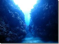okinawa kerama diving1027