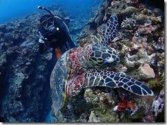 okinawa kerama diving1074