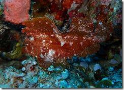 okinawa kerama diving1075