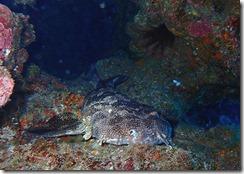 okinawa kerama diving1078