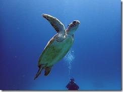 okinawa kerama diving1079