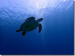 okinawa kerama diving1080