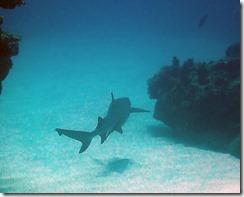 okinawa kerama diving1081
