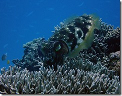 okinawa kerama diving1093