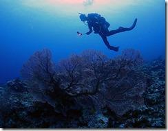 okinawa kerama diving1094