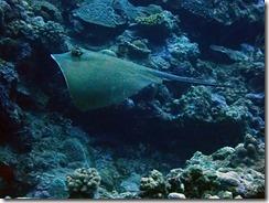 okinawa kerama diving1099