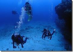 okinawa kerama diving1103