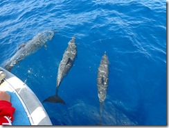 okinawa kerama diving1106