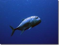 okinawa kerama diving1109