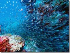 okinawa kerama diving1111