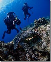 okinawa kerama diving1129