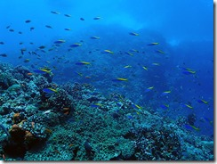 okinawa kerama diving1134