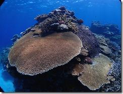 okinawa kerama diving1135