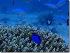okinawa kerama diving1137