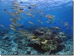 okinawa kerama diving1139
