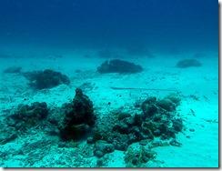 okinawa kerama diving1141