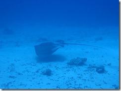 okinawa kerama diving1142