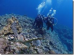 okinawa kerama diving1144