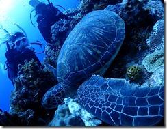 okinawa kerama diving1148