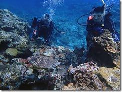 okinawa kerama diving1151