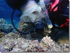 okinawa kerama diving1152