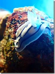 okinawa kerama diving1156
