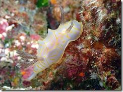 okinawa kerama diving1157