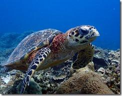 okinawa kerama diving1158