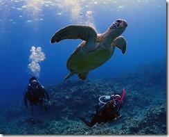 okinawa kerama diving1162