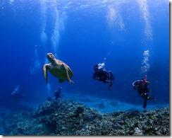 okinawa kerama diving1163