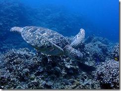 okinawa kerama diving1164