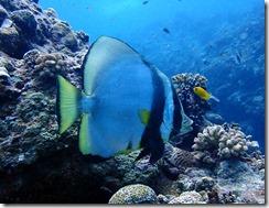 okinawa kerama diving1166
