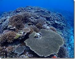okinawa kerama diving1167