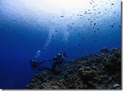 okinawa kerama diving1172