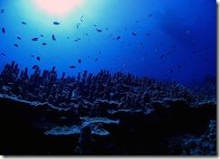 okinawa kerama diving1175