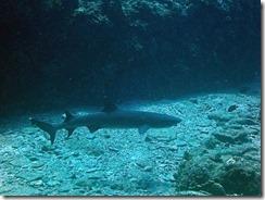 okinawa kerama diving1177
