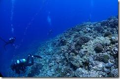 okinawa kerama diving1186
