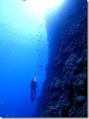 okinawa kerama diving1187