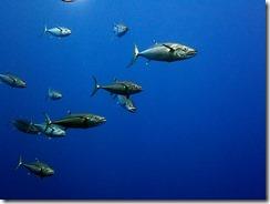 okinawa kerama diving1189