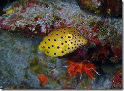 okinawa kerama diving1193