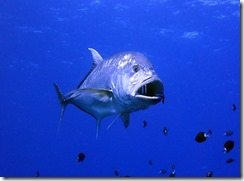 okinawa kerama diving1195