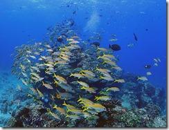 okinawa kerama diving1197