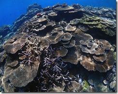 okinawa kerama diving1199