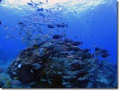 okinawa kerama diving1200