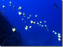 okinawa kerama diving1209