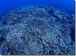 okinawa kerama diving1213