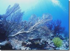 okinawa kerama diving1214